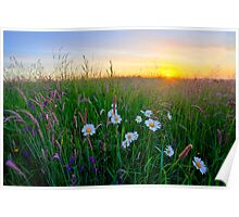 Meadow Sunrise Poster