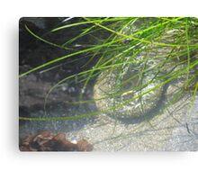 In a Tidal Pool Canvas Print