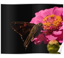Fuzzy Moth on Pink Flower Poster