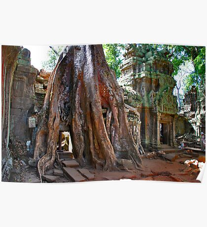 Angkor Wat, Ta Prohm Poster