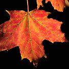 Stunning leaf by Lauren Banks