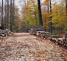 The old pathway in Tervuren forest (Belgium) by Antanas