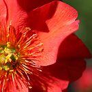 Red, yellow, green by Steven Carpinter
