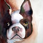 Boston Terrier by ddhabicht