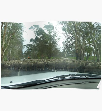 Moving a large mob of sheep. Barossa Valley, S.Aust. Poster