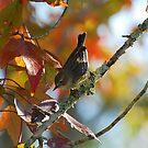 Sparrow by Irvin Le Blanc