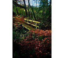 Autumnal Wonderland Photographic Print