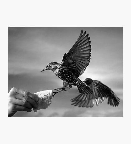 The Birds Photographic Print