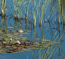 2009 Water lilies on dam Rosewhite Rd by Fred Mitchell