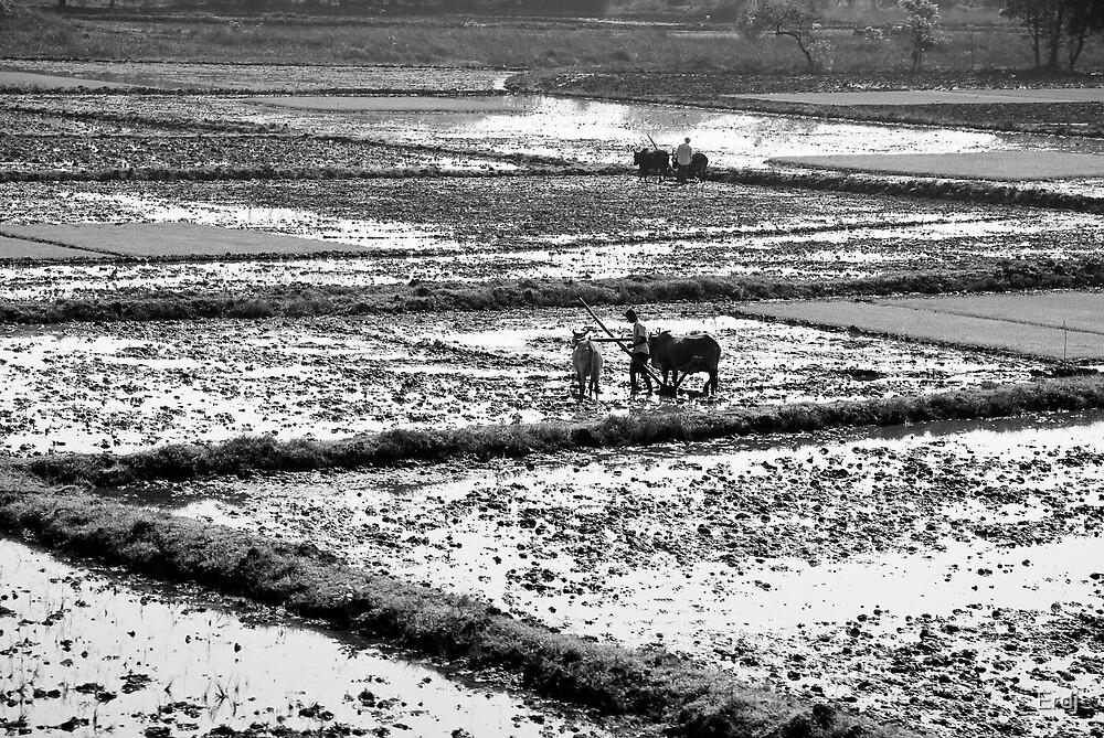 Till the field by Erdj