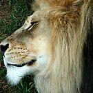 The King Sleeps...Melbourne Zoo by graeme edwards