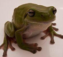 Australian Green Tree Frog (Litoria caerulea) 5 by WantedImages