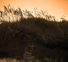 """""""Cherry Grove, SC"""" by rodster62"""