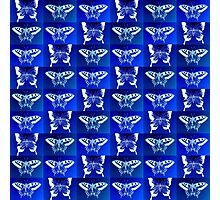 Blue Butterfly Fantasy Photographic Print