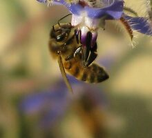 The Bees Knees by bethhalgren