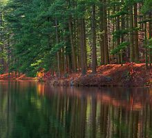 Forest Shoreline Reflections by Michael Mill