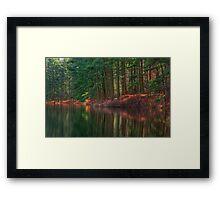 Forest Shoreline Reflections Framed Print