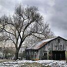 Gray Day  by billium