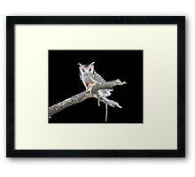 Southern White Faced Owl Framed Print