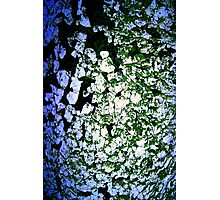 Moss-Tainted White with Blue Light Photographic Print