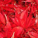 Fallen Acer Leaves by Wayne Gerard Trotman