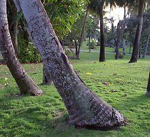 Trees on Paradise Island, Nassau, Bahamas by Ann Marie Donahue