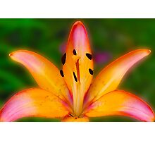 Garden Lily Photographic Print