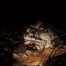 In the night by SKNickel