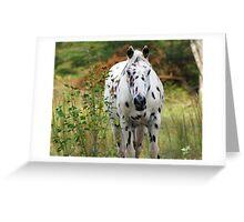 Beautiful Appaloosa!!!!!!!! Greeting Card