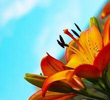 Garden Lily 3 by TwinPowerTammy