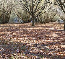 Autumn in May by Nicole Mahony by Nicole Mahony