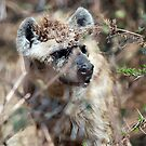 Spotted Hyena - Ngorongoro Crater by Brad Francis