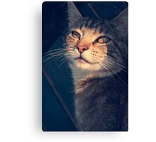 Tabs in the Shadows Canvas Print