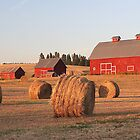 Golden Summer Barn Scene In Idaho by JaneLoughney