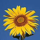 Cheery Bright Yellow Sunflower by JaneLoughney