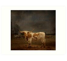 Texas Long Horn Art Print