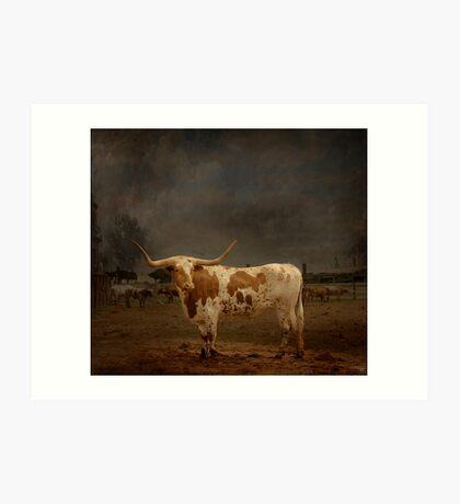 Texas Long Horn Art Print