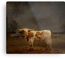Texas Long Horn Metal Print