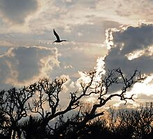 Late Afternoon-Edisto Island by ewersphoto
