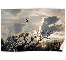 Late Afternoon-Edisto Island Poster