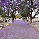 Purple Petals upon the Pavement by Wendi Donaldson
