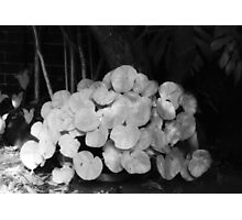 there be begonias in my garden of dreams Photographic Print