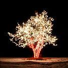 Chatfield Tree 19 by greg1701