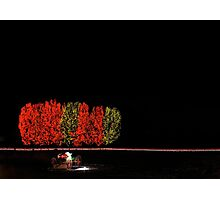 Chatfield Trees and Sleigh Photographic Print