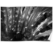 silvery nature Poster