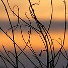 Sunset Strips by Lynda Kerr