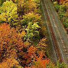 Autumn Tracks by Jeannette Sheehy