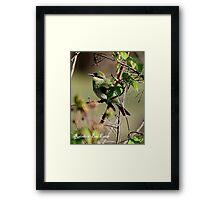 ''Rainbow Bee Eater'' Framed Print