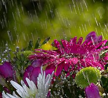 Flowers in the Rain by geoff curtis
