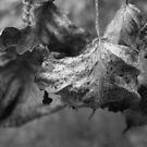 Grape Leaves- B&W by Tracy Wazny